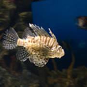 Light Fish Poster