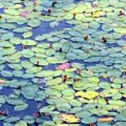 Light On Lily Pads Poster