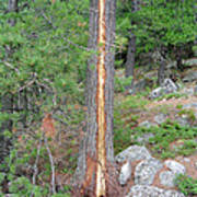 Lightning Strike On Tree Poster
