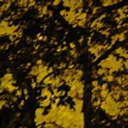 Lighttthru Forest Poster