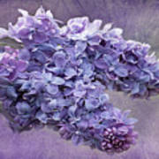 Lilac Spring Poster