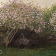 Lilacs Poster by Claude Monet