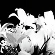 Lilies In Black And White Poster