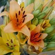 Lillies - Peach And Yellow Colors Poster
