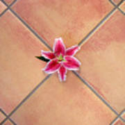 Lily Alone On Tile Poster