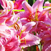 Lily Garden Floral Art Prints Pink Lilies Baslee Troutman Poster