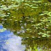 Lily Pad Pond Poster