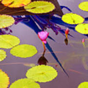 Lily Pads 2 Poster