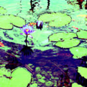 Lily Pads And Koi 2 Poster