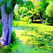 Lily Pond #5 Poster