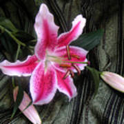 Lily Stem On Green Brocade Poster