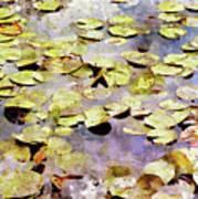 Lilypads W C Poster