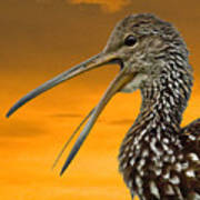 Limpkin At Sunset Poster