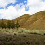 Line Of Trees At Painted Hills Poster