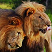 Lion 22 Poster