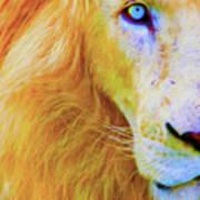 Lion Blue By Nicholas Nixo Efthimiou Poster