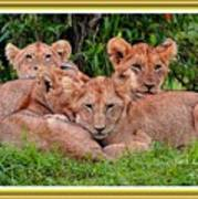 Lion Cubs. L A With Decorative Ornate Printed Frame. Poster