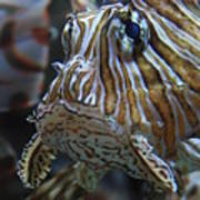 Lion Fish Profile Poster