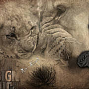 Lion Love Big And Small Poster