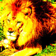 Lion Of Judah Poster