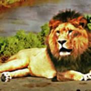 Lion Resting Poster
