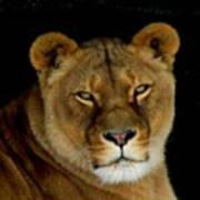 Lioness. No.2 Poster