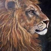 Lions Portrait Poster