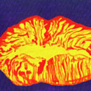 Lips Poster by Rishanna Finney