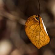 Little Autumn Leaf Poster