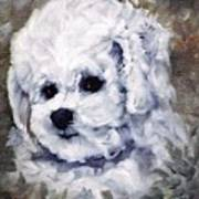 Little Bichon  Poster