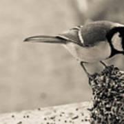 Little Bird Feeding Poster