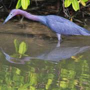 Little Blue Fishing Poster