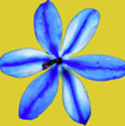 Little Blue Flower On A Yellow Background Poster