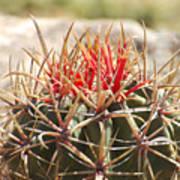 Little Cactus Poster
