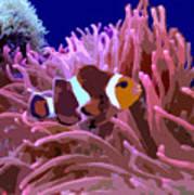 Little Clown Fish Poster