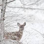 Little Doe In Snow Poster