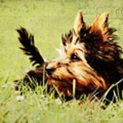 Little Dog Poster