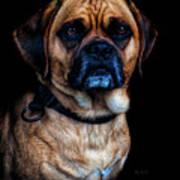 Little Dog Big Heart Poster