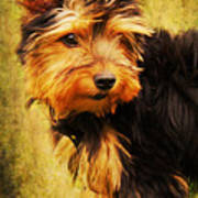 Little Dog II Poster by Angela Doelling AD DESIGN Photo and PhotoArt