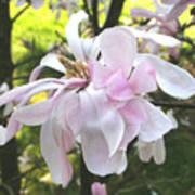 Little English Flower Poster