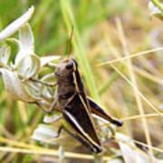 Little Grasshopper 2 Poster