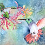 Little Hummingbird Poster
