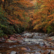 Little Pigeon River In Autumn Poster
