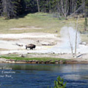 Live Dream Own Yellowstone Park Bison Text Poster