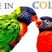 Live In Color Poster