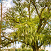 Live Oak And Spanish Moss 2 - Paint Poster