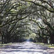 Live Oak Lane In Savannah Poster