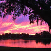 Live Oak Sunset Poster