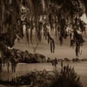 Live Oak Tree Spanigh Moss Sepia Silhouette Poster