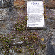 Living Wall At Donegal Castle Ireland Poster
